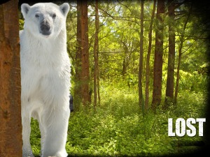 lost_polar_bear02