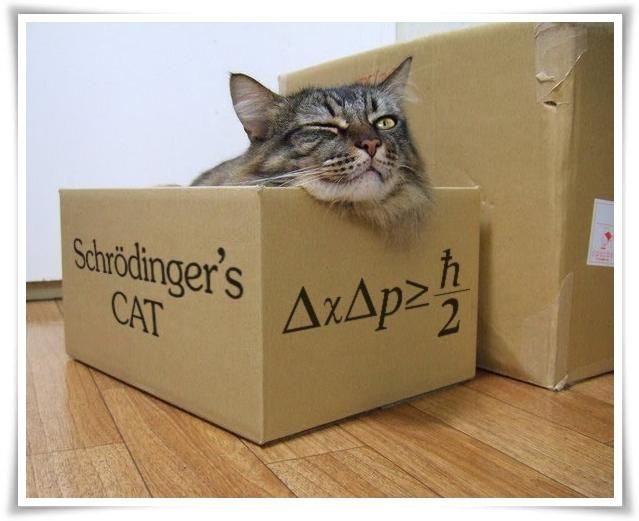 il-gatto-di-schroedinger